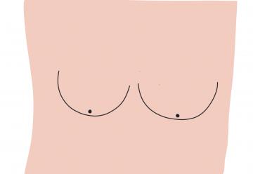 Les seins, les oreilles et la plage.