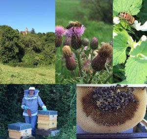 Le FCC Lille protège la biodiversité